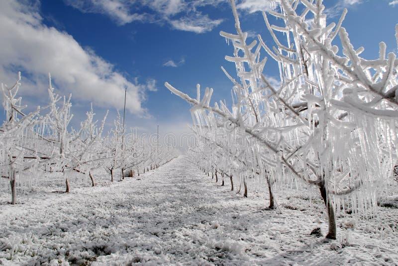 ochrona mrozowy śnieg zdjęcia stock