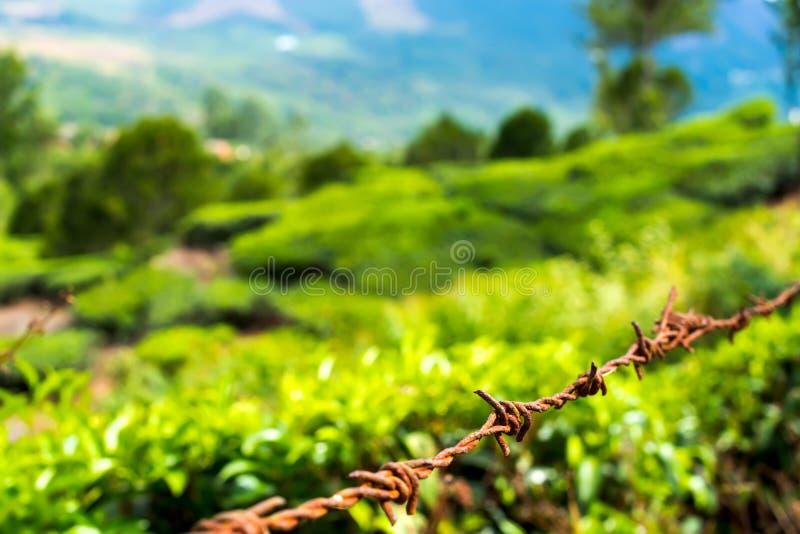 Ochrony pojęcie stalowy drut kolczasty na wiejskim zielonym backgroun zdjęcie royalty free