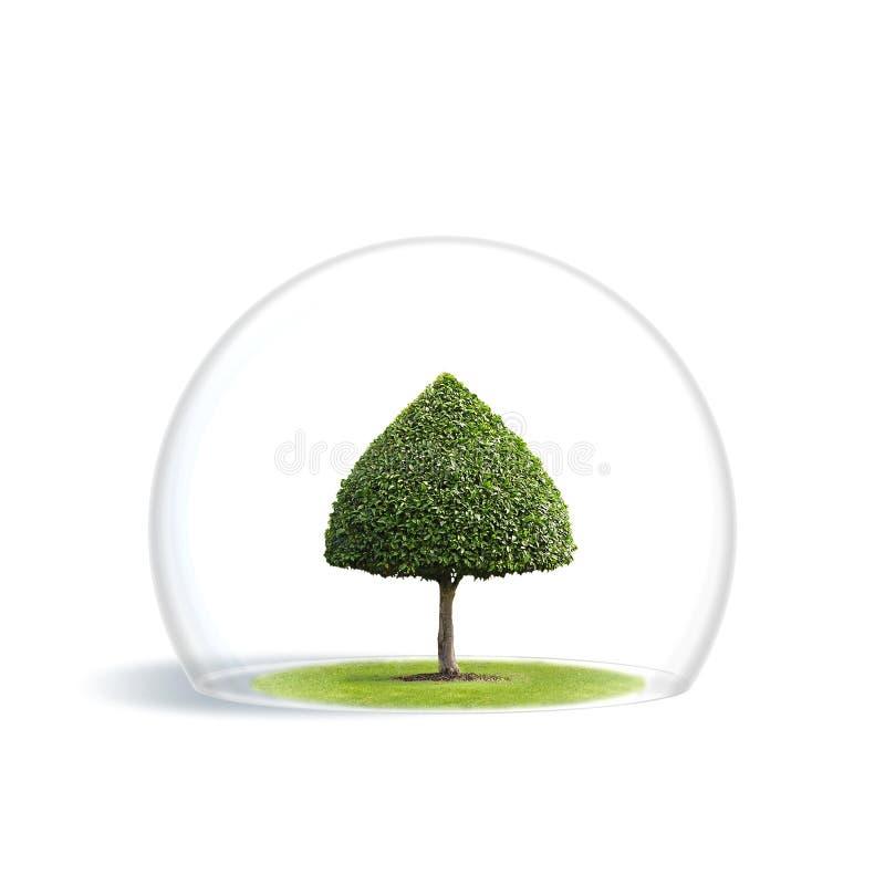 ochrony zielony drzewo obrazy stock