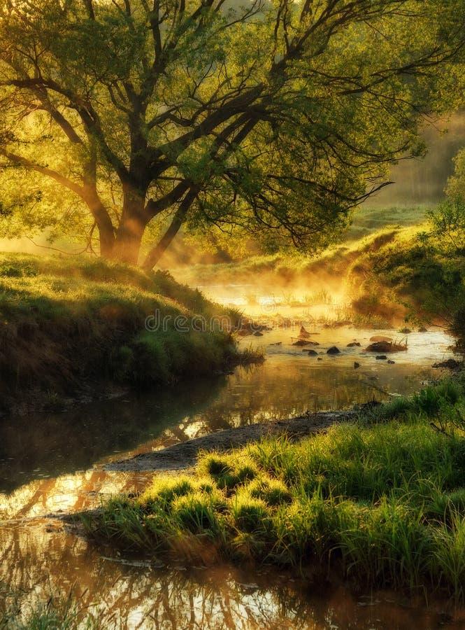 Ochtend dageraad dichtbij een schilderachtige rivier royalty-vrije stock afbeeldingen