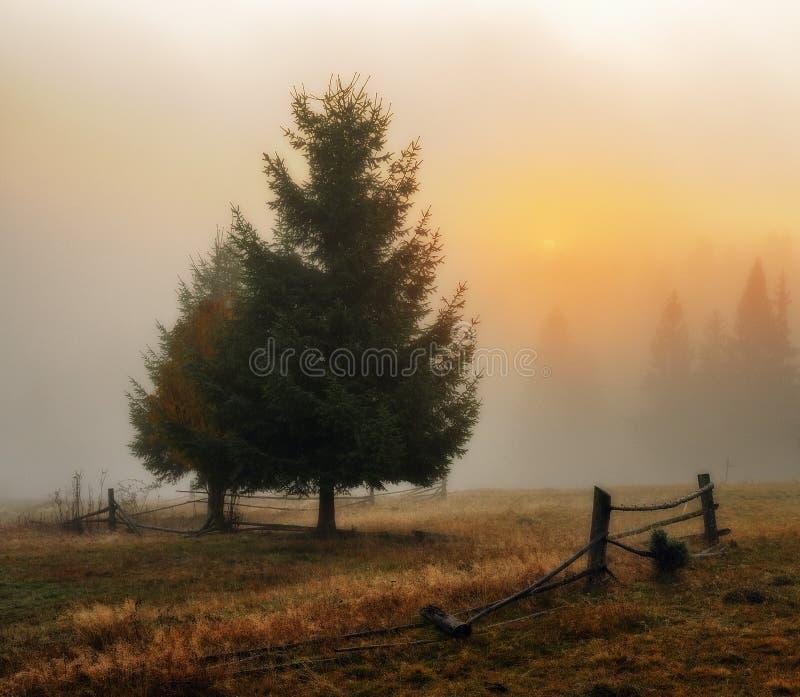 Ochtend de herfstdageraad in de Karpatische Bergen stock afbeelding