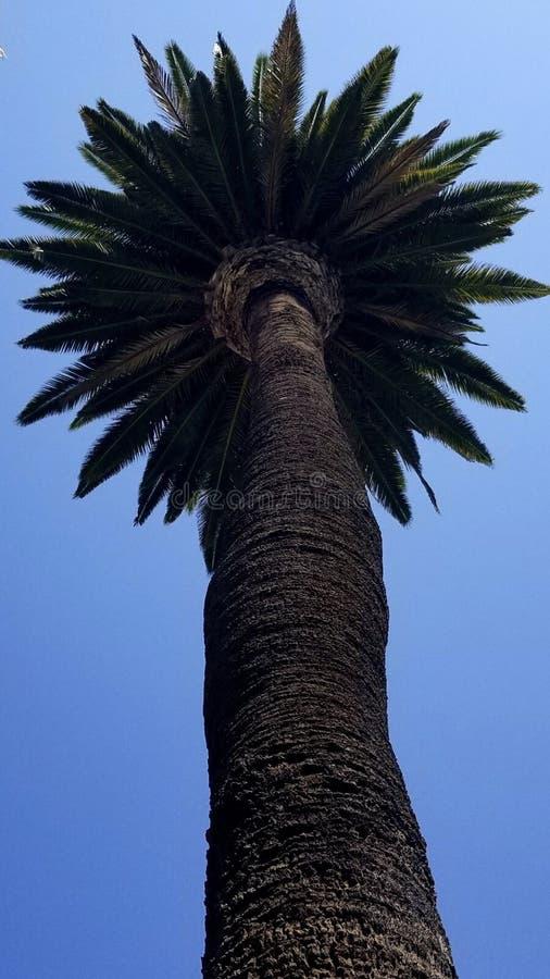 Ochtend in de palmenhemel van La Los Angeles royalty-vrije stock afbeeldingen