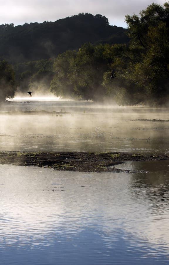 Ochtend door rivier stock foto