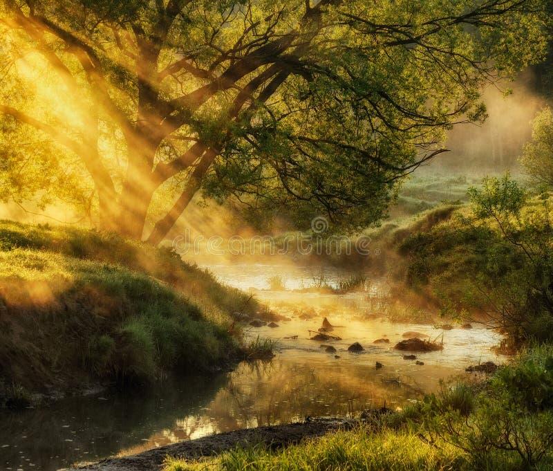 Ochtend een schilderachtige mistige dageraad door de rivier Zonstralen royalty-vrije stock afbeelding