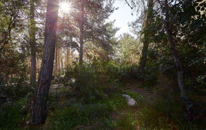 Ochtend in het de lentebos stock fotografie