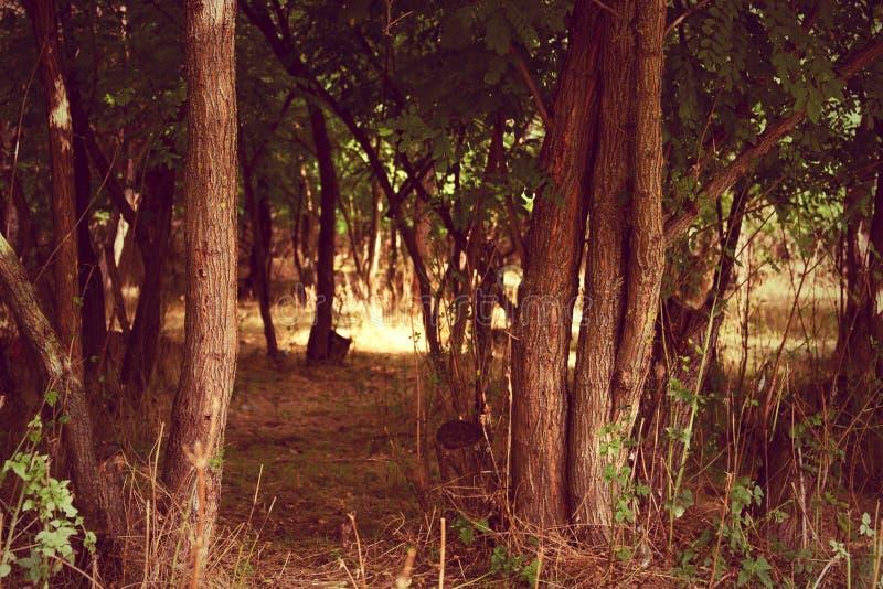 Ochtend in het hout - rode versie stock foto's
