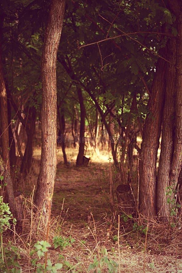 Ochtend in het uitgevoerde hout - royalty-vrije stock afbeeldingen
