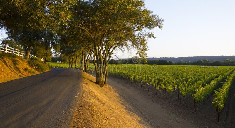 Ochtend naast wijnweg met wijngaarden stock afbeeldingen