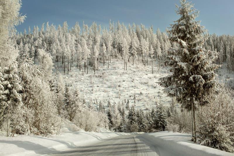 Ochtend op de winter bosdieweg, bomen met wit bevroren s worden behandeld stock foto's