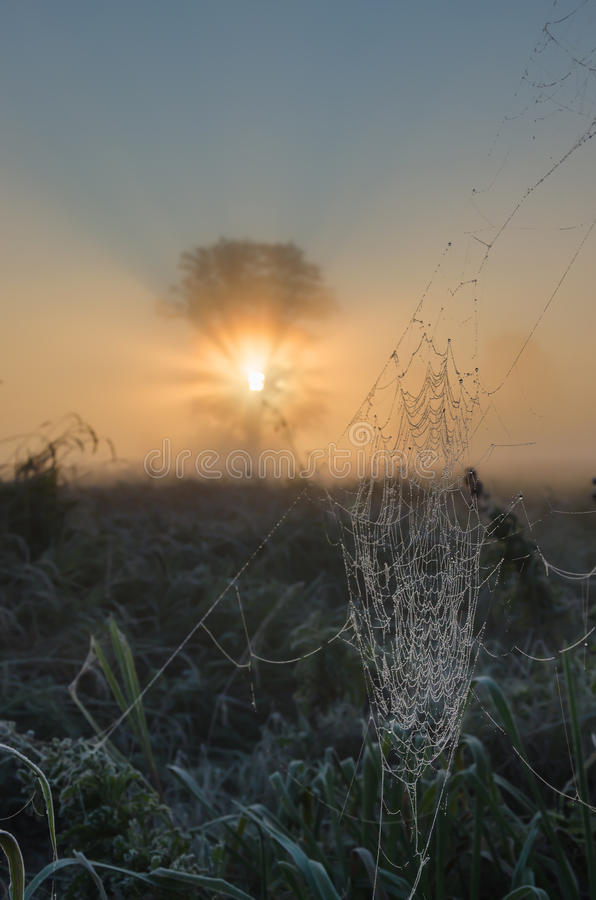 Ochtend spiderweb met zonsopgang stock afbeelding