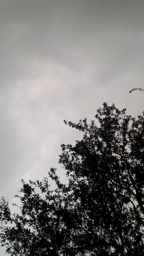 Ochtendbomen stock foto