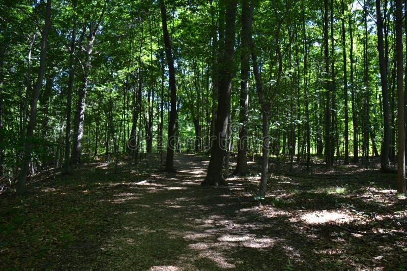 Ochtendbomen stock afbeelding