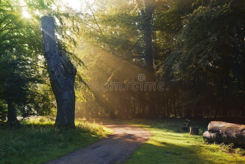 Download Ochtendboom stock afbeelding. Afbeelding bestaande uit achtergrond - 39104391