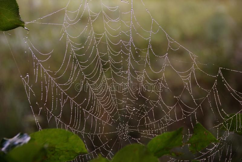 Ochtenddauw op een spinneweb, close-up stock foto's