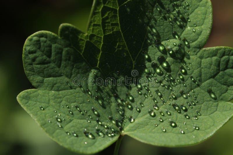 Ochtenddauw op groene bladeren in de herfst royalty-vrije stock foto's