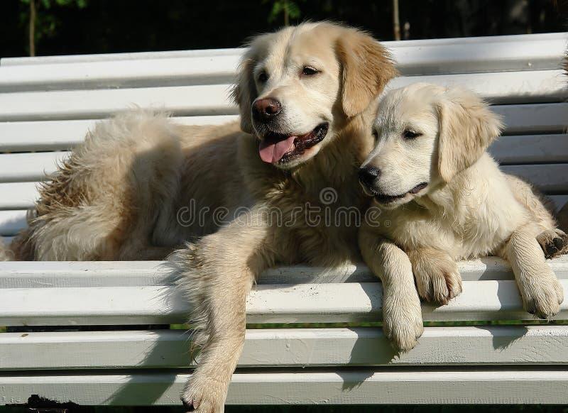 Ochtendgang van de hond in het hout royalty-vrije stock foto's