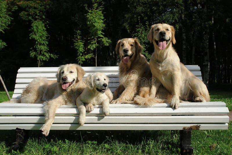 Ochtendgang van de hond in het hout royalty-vrije stock foto