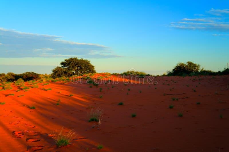 Ochtendlandschap in de woestijn van Kalahari, Keetmanshoop, Namibië stock afbeelding