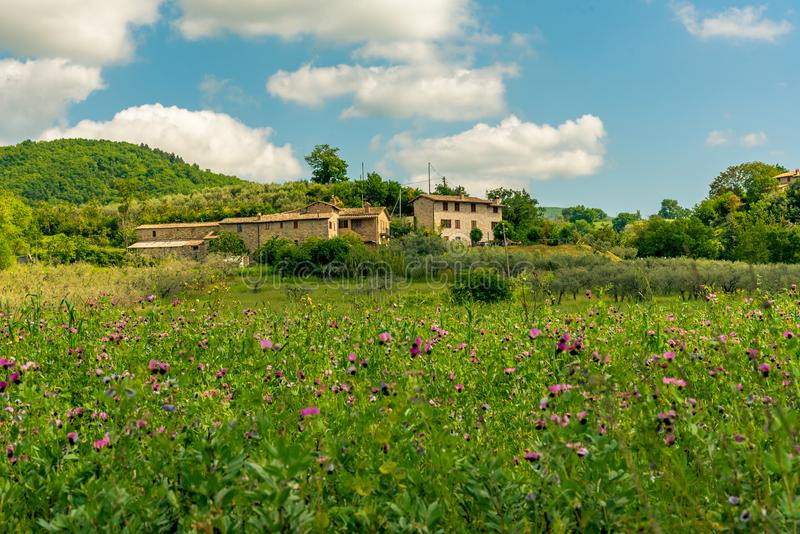 Ochtendmening met de mooie heuvels van Umbrië dichtbij Assisi, Italië royalty-vrije stock afbeelding