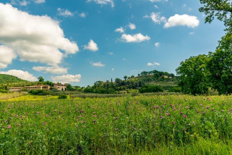 Ochtendmening met de mooie heuvels van Umbrië dichtbij Assisi, Italië royalty-vrije stock foto's