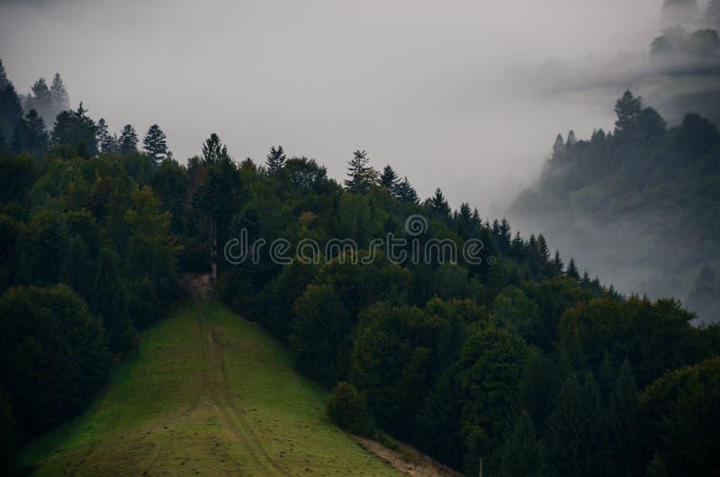 Ochtendmist in de bergen van de Karpaten op de achtergrond van bergpieken met bomen worden behandeld die royalty-vrije stock fotografie