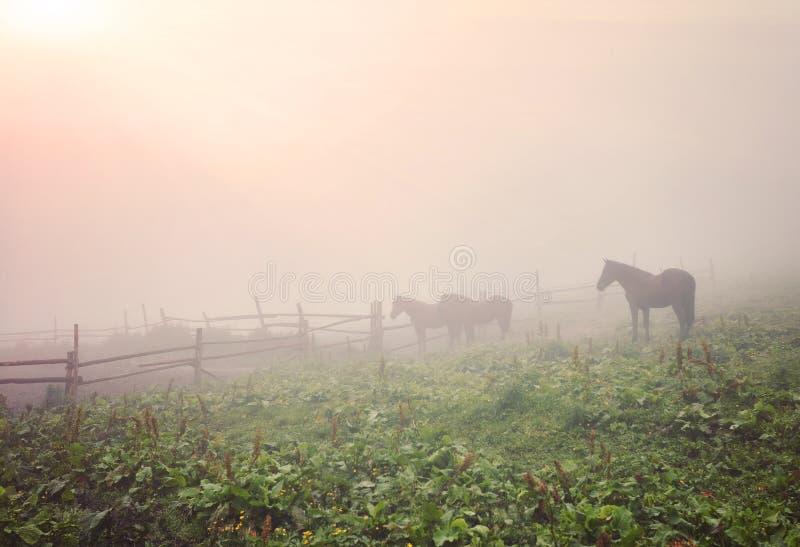 Ochtendmist met paarden royalty-vrije stock afbeelding