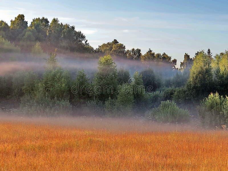 Ochtendmist over de bosweide Vroege ochtend royalty-vrije stock foto's