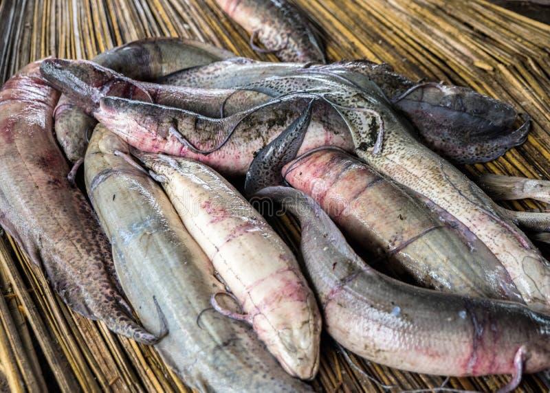 Ochtendvangst die van Afrikaanse Lungfish op een papyrusmat liggen op de vloer, klaar voor het wegen bij de lokale marktvissen Ba royalty-vrije stock afbeelding