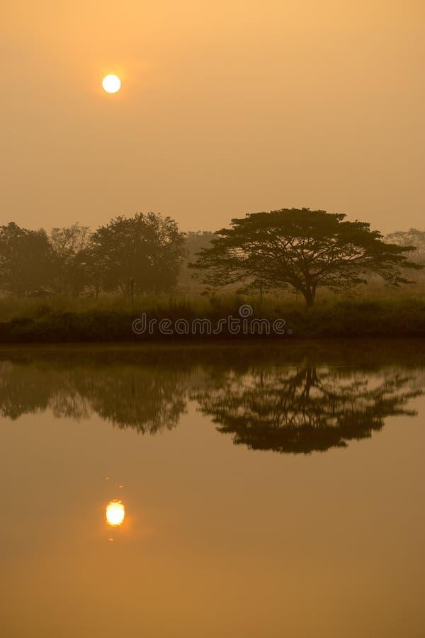 Ochtendzon met waterbezinning in een gouden vijver en silhouett royalty-vrije stock afbeeldingen