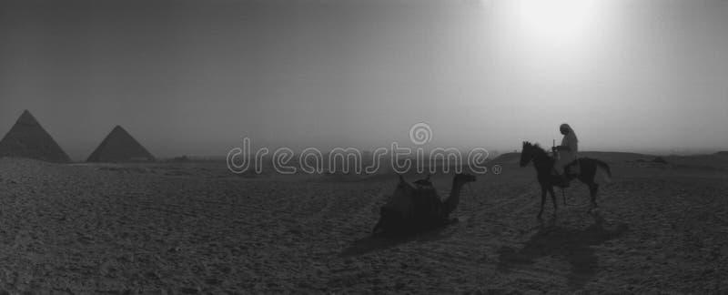 Ochtendzon over Piramides van Giza Egypte tijdens de Kameel van de Piramideszonsopgang het Berijden royalty-vrije stock foto