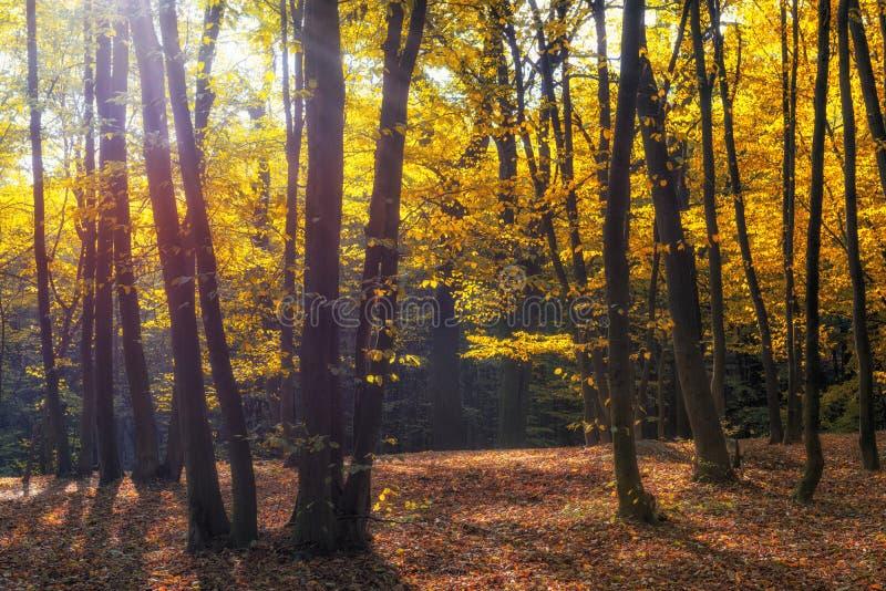 Ochtendzonlicht in het de herfstpark royalty-vrije stock afbeeldingen