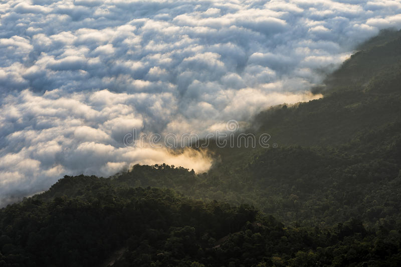 Ochtendzonsopgang met mist op Doi Pha Tang: Chiangrai royalty-vrije stock afbeelding