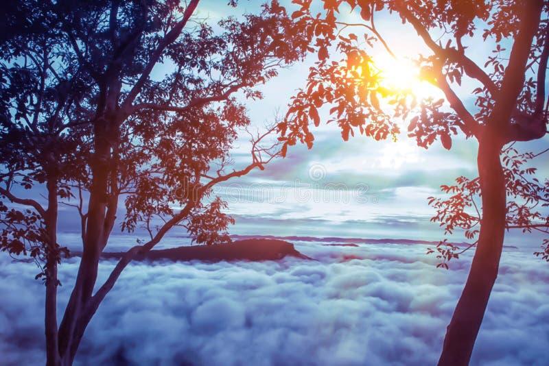 Ochtendzonsopgang op berg met overzees van mist en boomachtergrond stock fotografie