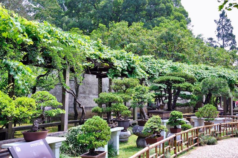 Ociągający się Ogrodowi bonsai fotografia stock
