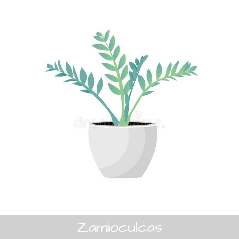 ocks? vektor f?r coreldrawillustration plantera krukan Zamioculcas blomma Plan stil stock illustrationer
