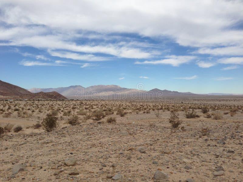 Octillo studni pustynia w Kalifornia obrazy royalty free