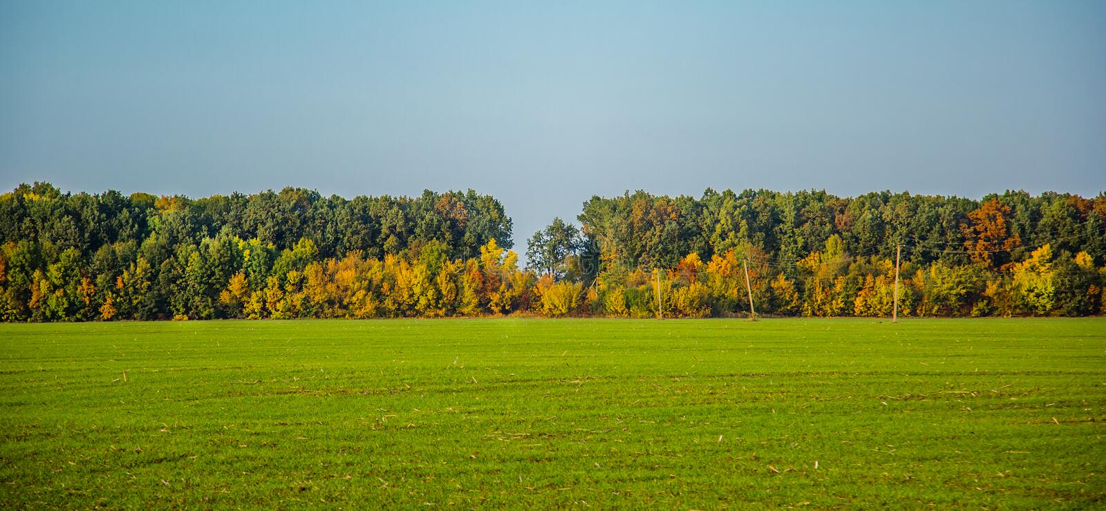 October, autumn in the forest a beautiful view from the field of golden, yellow, orange and green trees. Background stock image