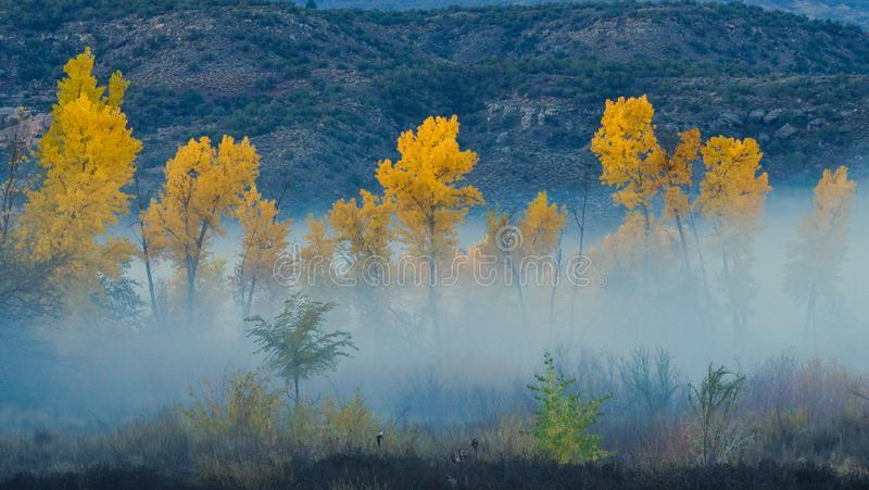 October Fog in the Canyon. Foggy Cottonwood trees in Autumn color. Horsethief Canyon State Wildlife Area in western Colorado has scenic views, migratory birds stock photos