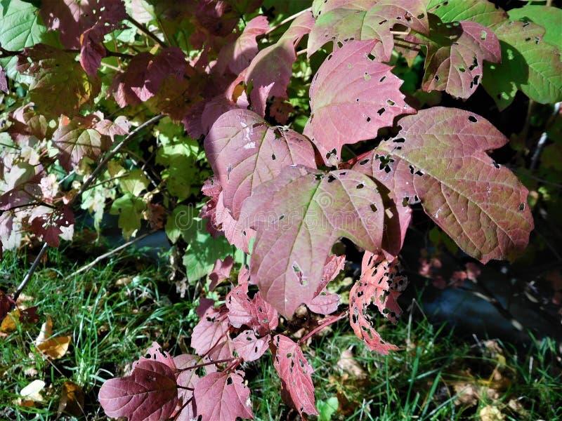 The autumn detail leaf royalty free stock photo