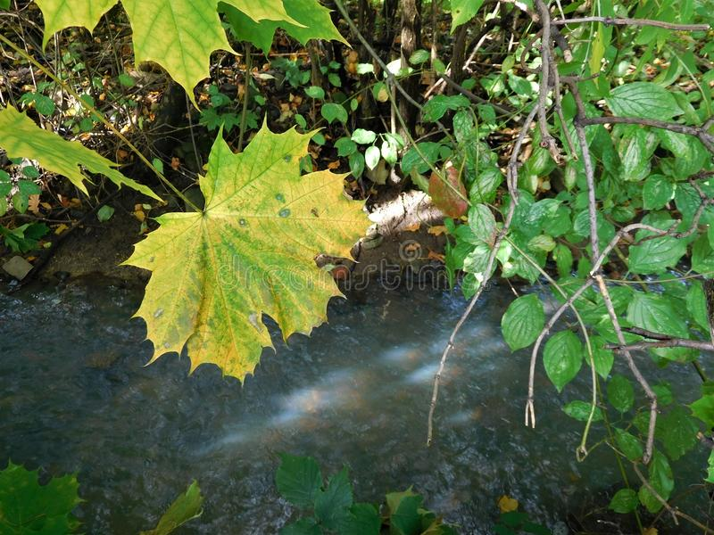 The autumn detail leaf and river stock image