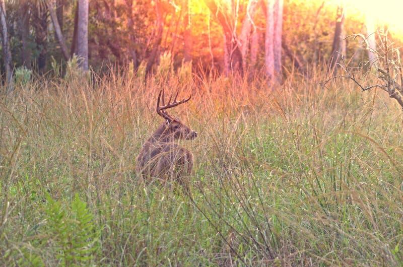 October Sky's big buck stock photography