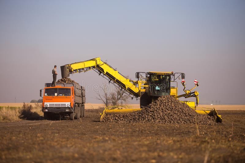 October 14, 2014. Ukraine. Kiev. A young Caucasian man works during the harvest in the field, loading sugar beet into a truck,. Using a loader, a sunny day and royalty free stock photos