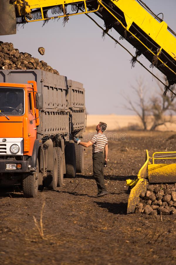 October 14, 2014. Ukraine. Kiev. A young Caucasian man works during the harvest in the field, loading sugar beet into a truck,. Using a loader, a sunny day and stock photos