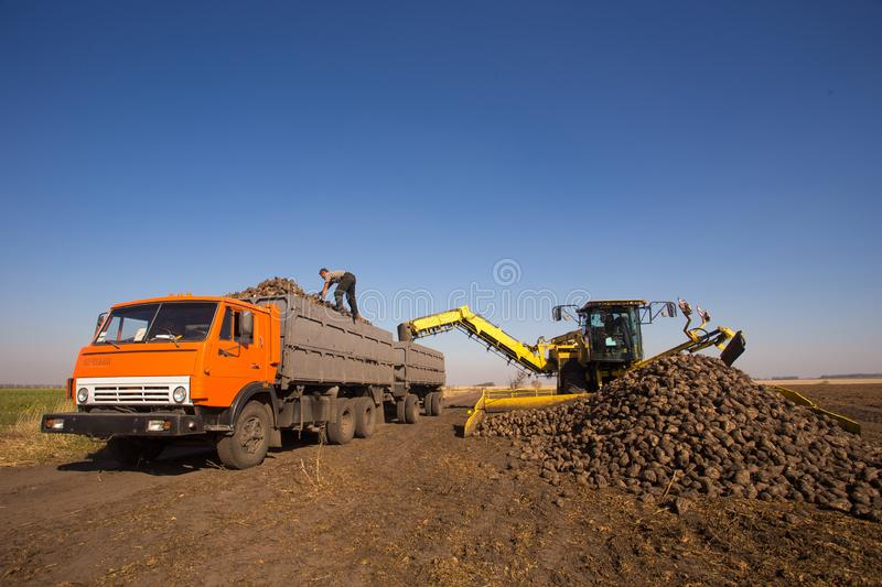 October 14, 2014. Ukraine. Kiev. A young Caucasian man works during the harvest in the field, loading sugar beet into a truck,. Using a loader, a sunny day and stock images