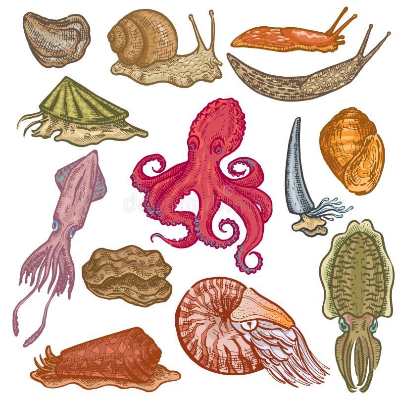 Octopi för tecken för molluskar för bläckfisk för skaldjurvektor marin- djura animalistic med tentakelostronsnigeln i havet vektor illustrationer