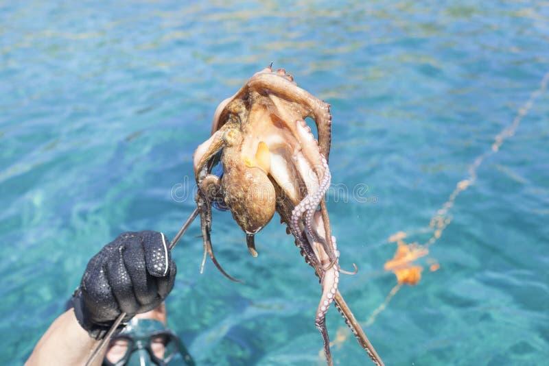 Octopu en una lanza foto de archivo