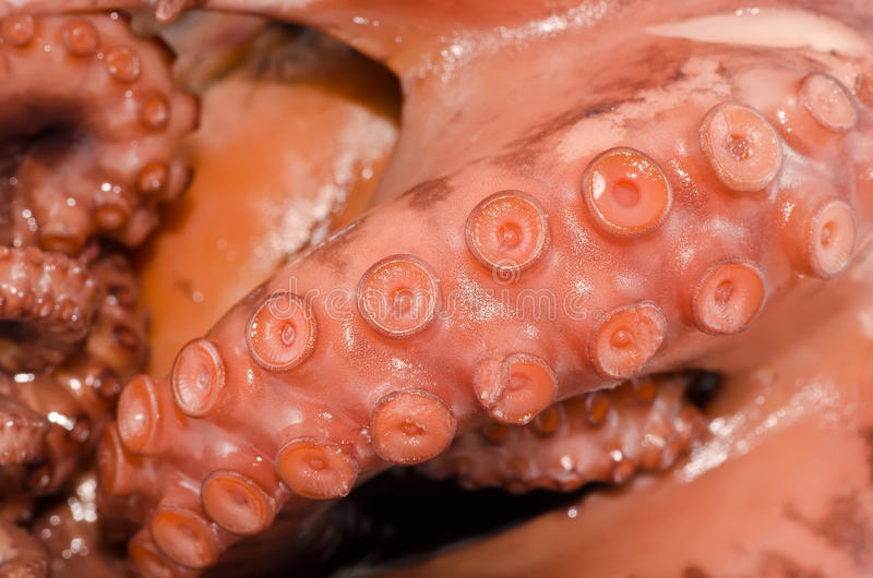 Download Octopus stock image. Image of snack, seafood, fresh, octopus - 21892391