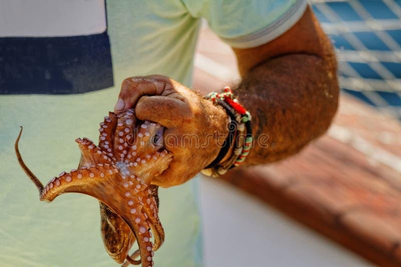 octopus royalty-vrije stock foto
