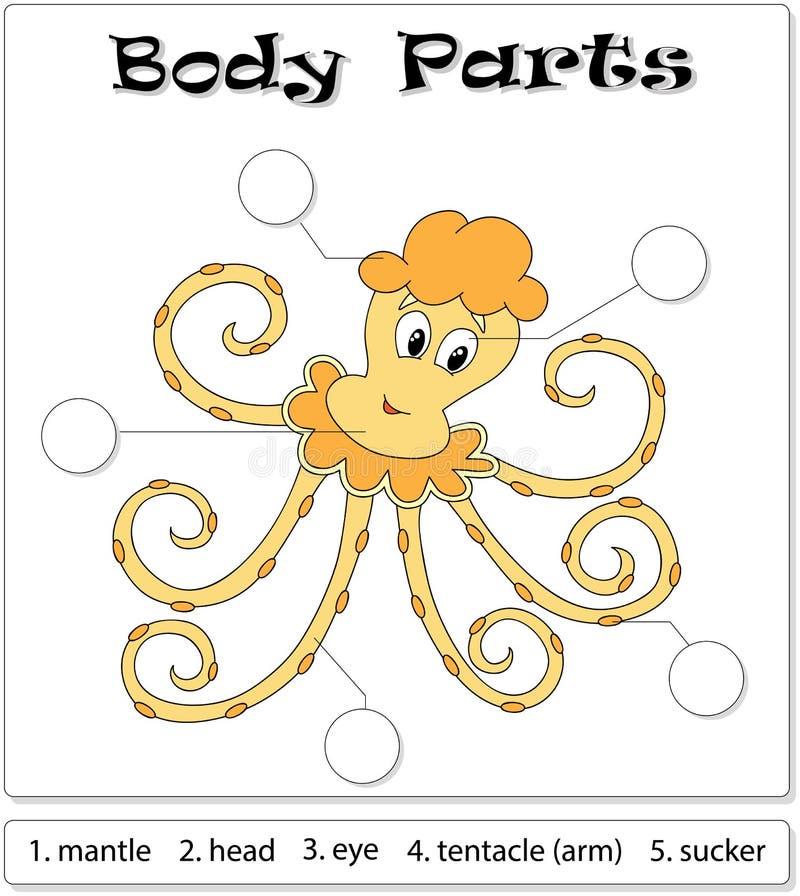 Octopus body parts stock vector. Illustration of single - 88316464