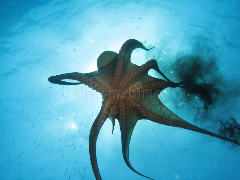 Octopus en zwarte inkt stock afbeelding